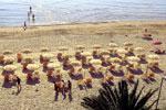 Cupra Marittima<br>beach
